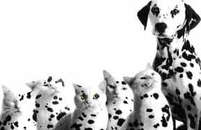 dalmation cats and dogs
