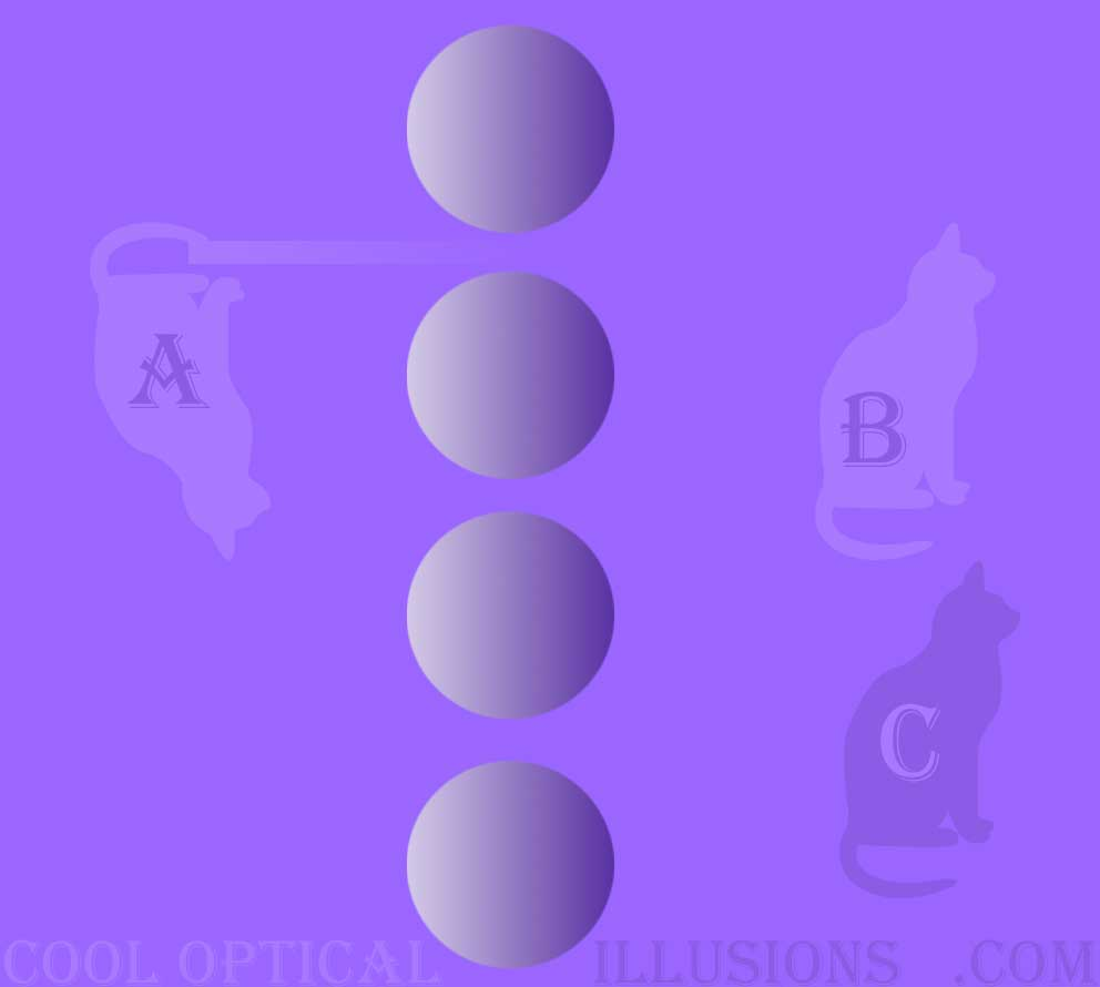 purple cat multiple illusion (balls and cats)