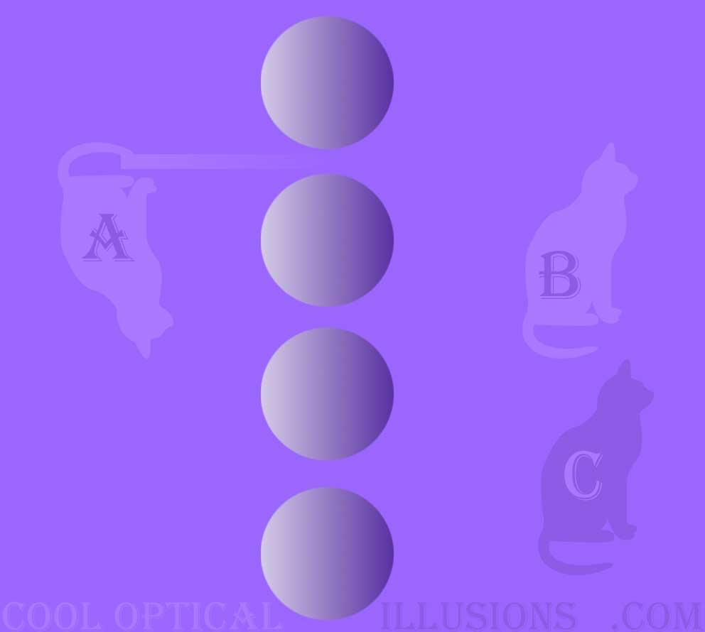 purple cat multiple illusion (balls and cats)
