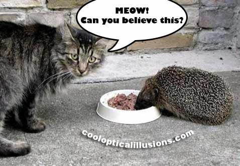 Kitty Cat Gets Food Stolen