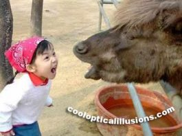 Funny Kid Yelling at a Horse