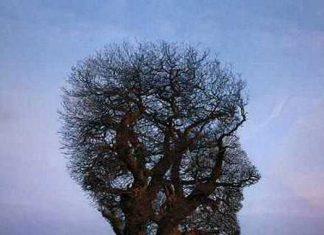 Definitely a Tree